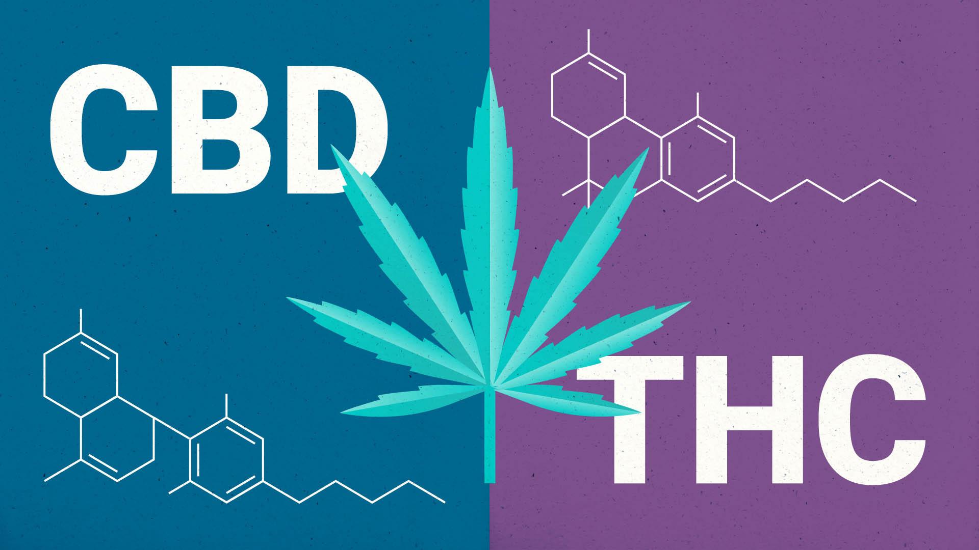 CBD vs. THC: A Brief Guide