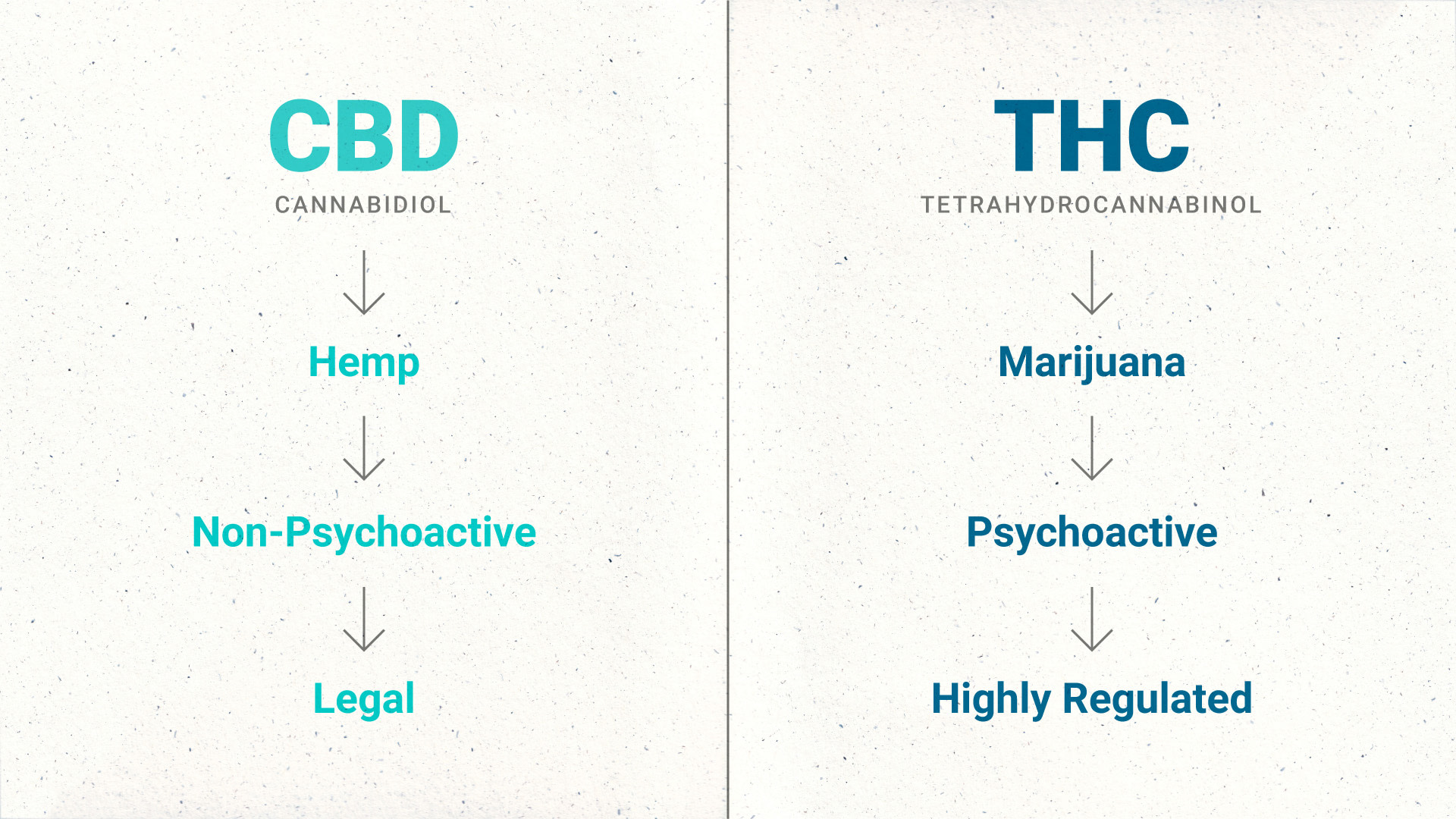 cbd thc comparison