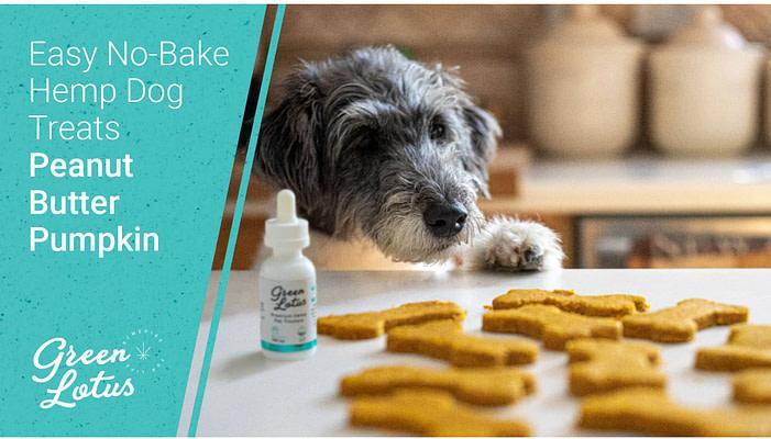 CBD Dog Treat Recipe